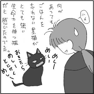 20120117 黒猫さん 15