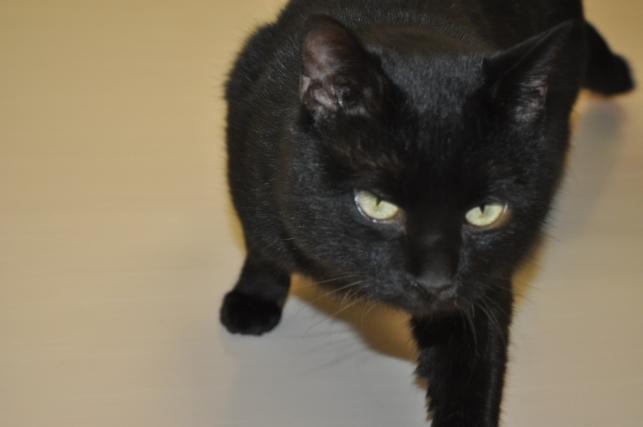 20130120 黒猫さん 2