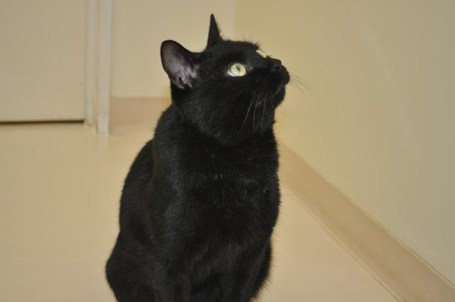 20130120 黒猫さん 1