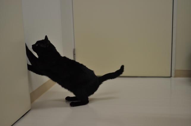 20130120 黒猫さん 3