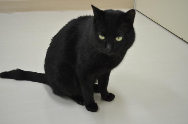 20130202 黒猫さん 4