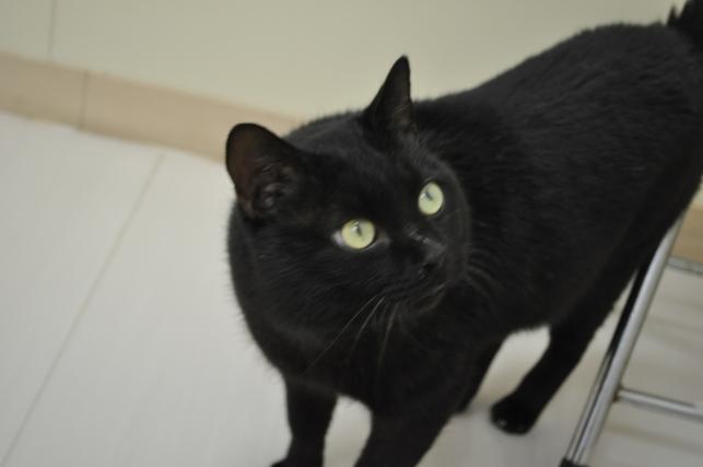 20130202 黒猫さん 1