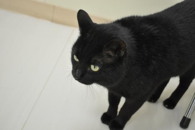 20130202 黒猫さん 2