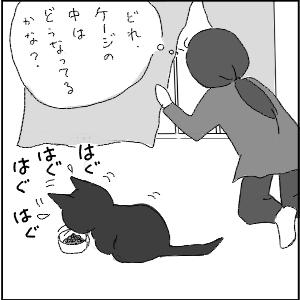 20130123 黒猫さん 1