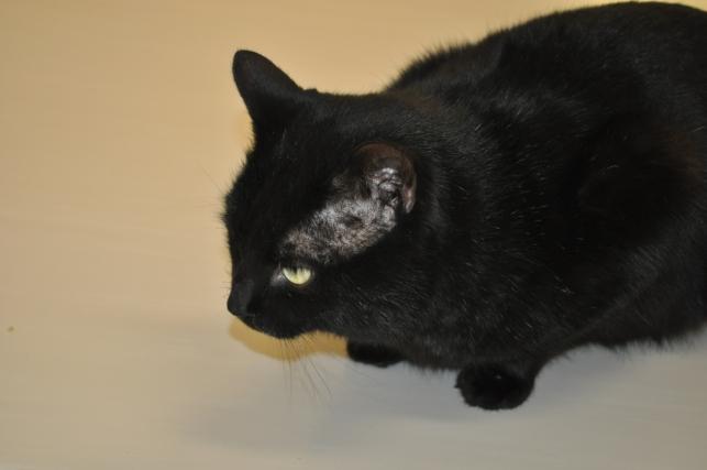20130211 黒猫さん 5