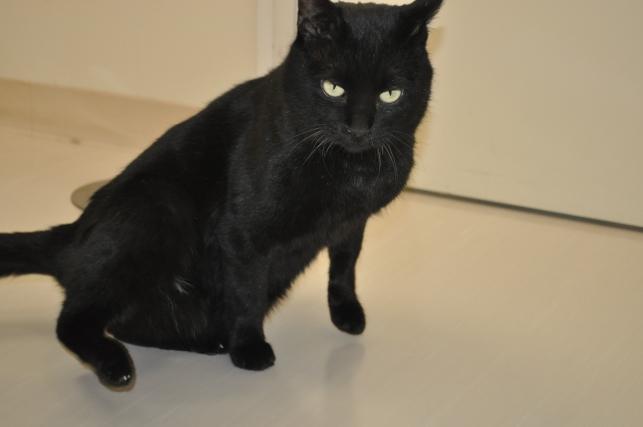 20130211 黒猫さん 7