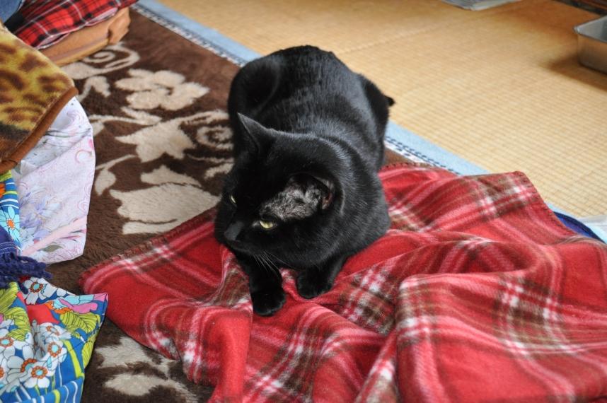 20130217黒猫さん
