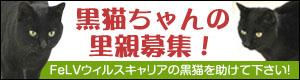 20121220155220946 黒猫さんばなーharuさま作