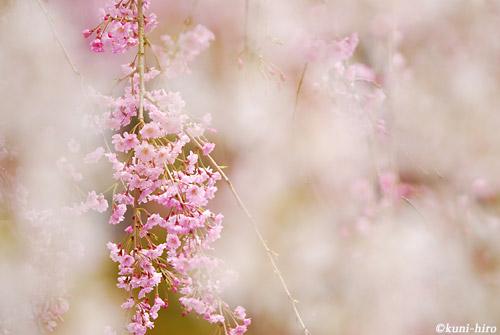 0415_120415_kyoto_171.jpg