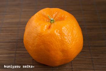 太田ポンカン