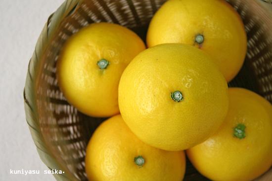 愛媛産 ・ ニューサマーオレンジ