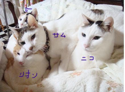 uenori.jpg