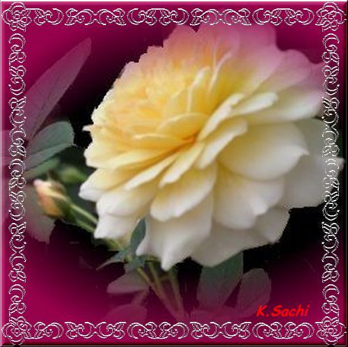 不安げな 黄色い薔薇