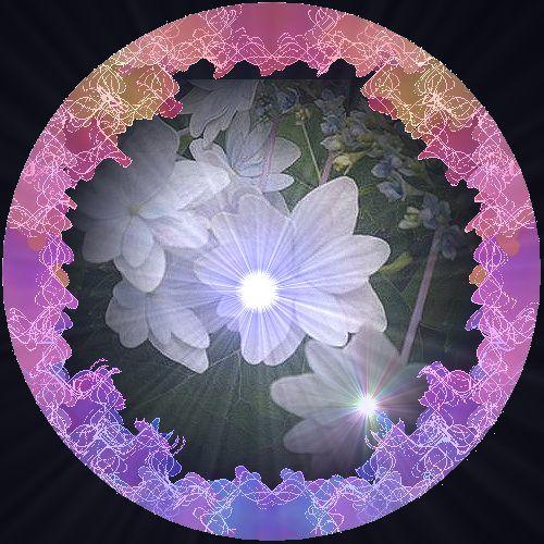 紫陽花白額 超新星