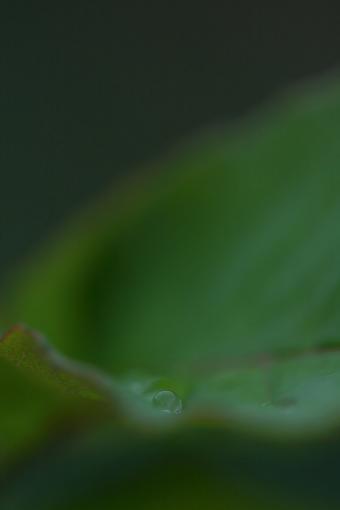 IMG_7619[1][1]