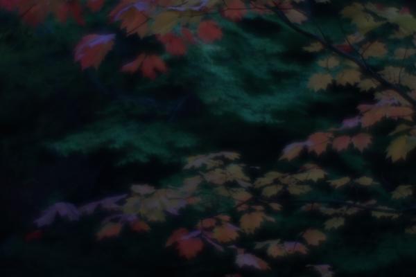 20141018-DSC06947.jpg