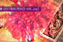 20110530-17.jpg