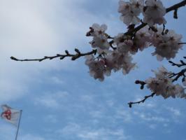 桜・空・市旗