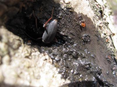 蜜を吸う虫
