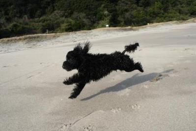 飛行犬クロ助