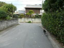 BlogP1570700.jpg