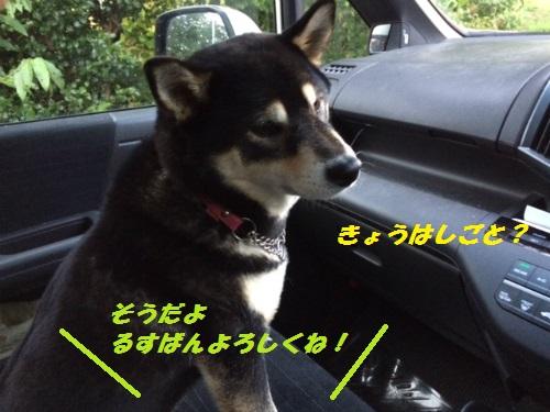 IMG_6035Blog_2014102311063415d.jpg