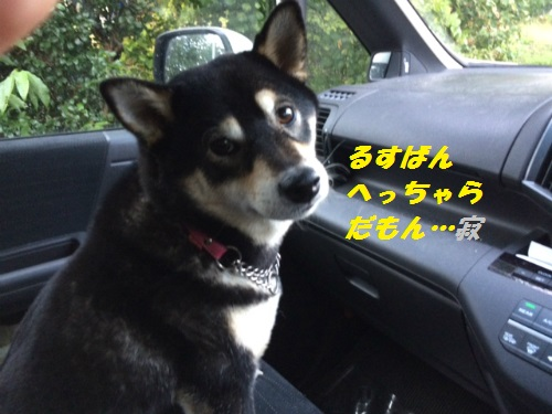 IMG_6038Blog_20141023110635216.jpg