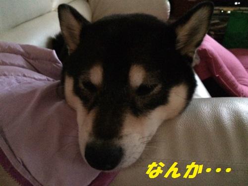 IMG_9017Blog.jpg