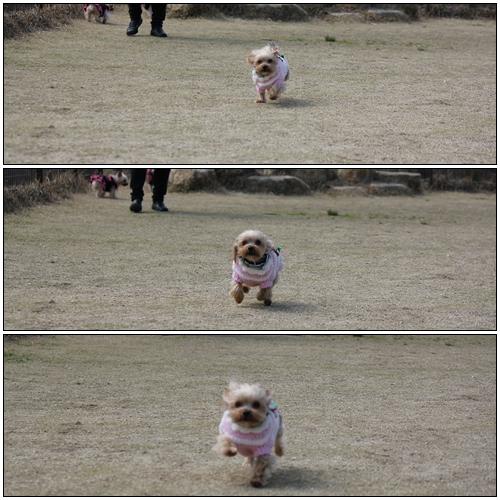走るクルミ