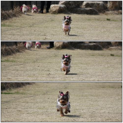 走るココ1