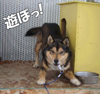 maccyo-kun (3)