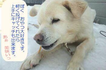 shiro02 (4)