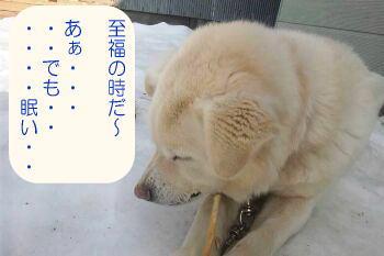 shiro02 (3)