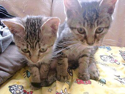 子猫3兄弟 (5)