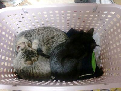 子猫3兄弟 (2)