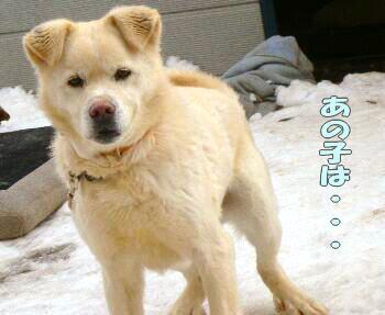 shiro0302-1.jpg