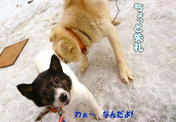 shiro0302-4.jpg