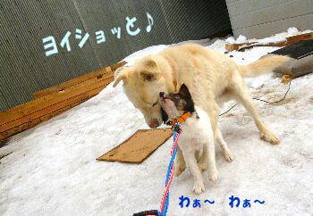 shiro0302-5.jpg