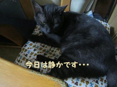 IMG_5681.jpg