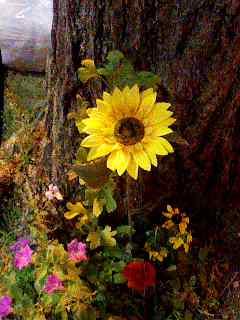 道端の花 120904_2035~001