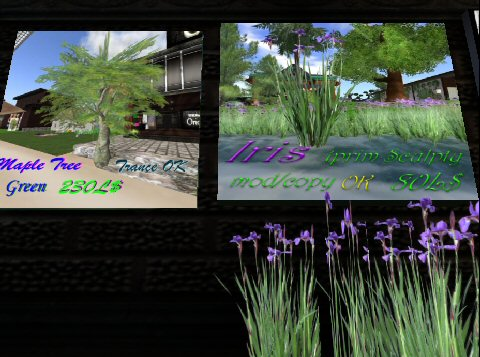 20100530_004.jpg