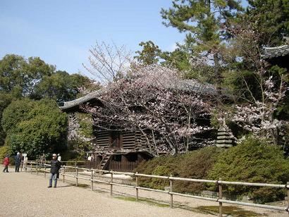 唐招提寺 校倉(宝蔵) 桜
