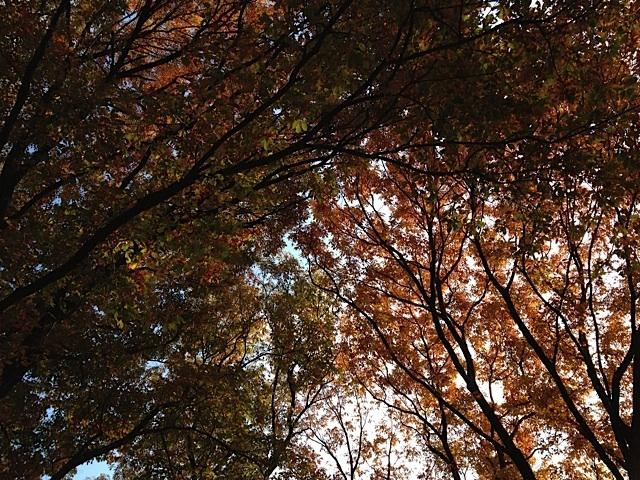 紅葉を見上げる