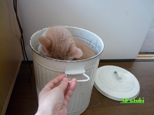 ゴミ箱Ⅱ。