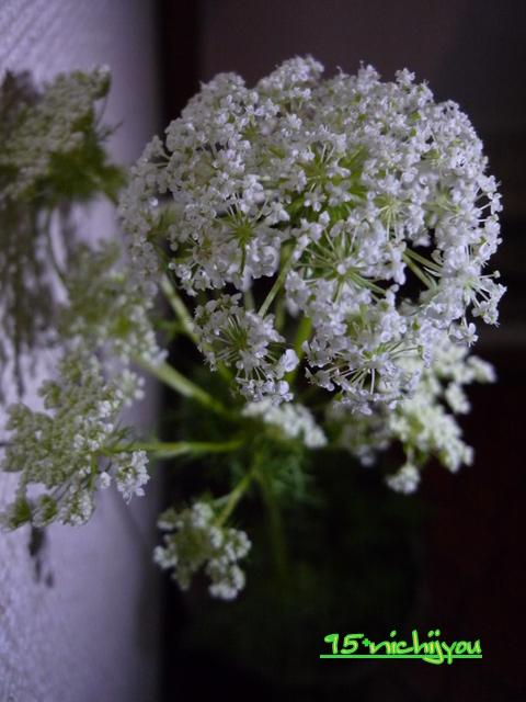 花がこんなん。