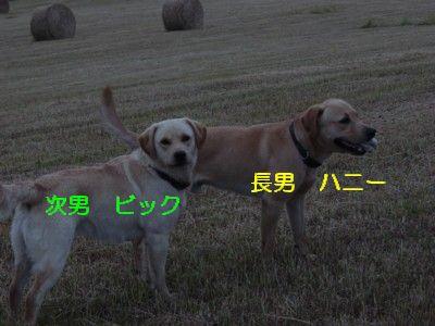 裏山 ハニー&ビック 016