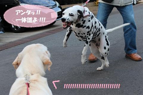 IMG_0584編集