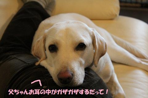 IMG_1801_1編集