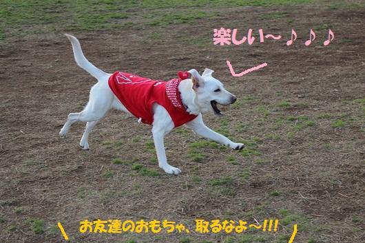 IMG_3751編
