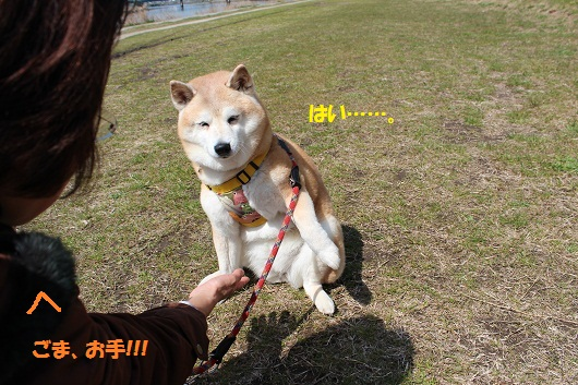 IMG_4333編